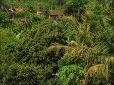 Dharhara village in Bihar