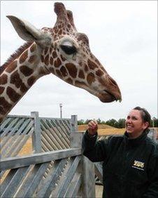 Zoo keeper with giraffe