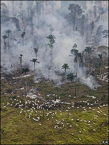 Burning trees in Brazil (Image: PA)