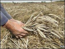 UK farm worker