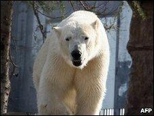 File image of a polar bear in a zoo in France