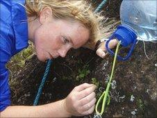 Olivia Renshaw tending the Anagramme ferns