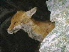 Fox on the night of the rescue