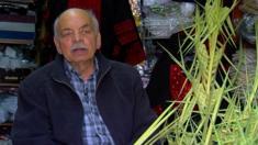 """يشتهر الفلسطيني حنا امسيح بصناعة سعف """"أحد الشعانين"""" للطوائف المسيحية، منذ عام 1958. ويجدل حنا السعف في محله الأقدم في مدينة رام الله و المتوارث عن اجداده."""