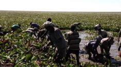 ورد النيل قد يقضي علي أكبر بحيرة في إثيوبيا