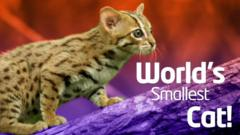 World's smallest cat image