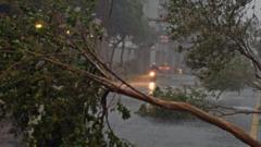 A motorcyclist rides past damaged trees in Taipei. Photo: 8 August 2015