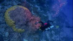 A diver inspects coral.