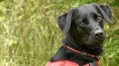 cystic-fibrosis-dog.
