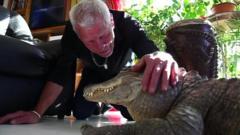 A man pats his pet alligator