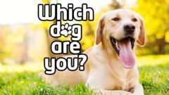 dog-quiz