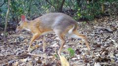 mouse-deer.