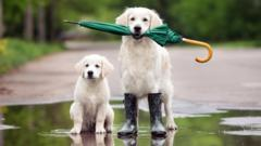 dogs-with-umbrella-in-puddle