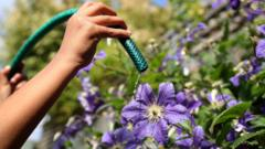 Flowers being watered from a garden hose as millions of people are facing a hosepipe ban