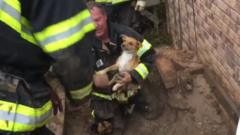Dog being rescued by fire fighters