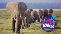 Elephant Herd for Quiz of the Week