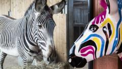 A picture of Gilbert and a real zebra