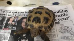 Tortoise shown on a piece of newspaper