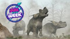 Three Triceratops looking for the Quiz of the Week!