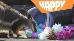 An animal with easter eggs and the Happy logo