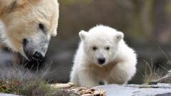 A polar bear cub and her mother