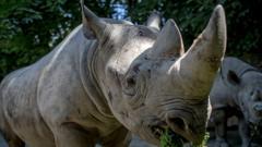 Olmoti-rhino