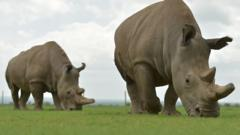 Rhinos on the grass