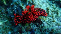 Sea slug.