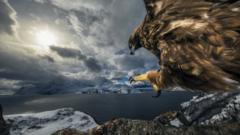 golden-eagle-on-branch.