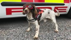 Diesel the fire dog wears his goggles