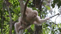 Alba in the trees