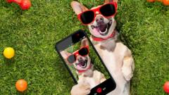 Pet-selfie