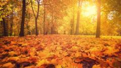 autumn-forest.