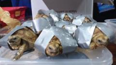 Turtles found at the NAIA