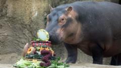 fiona-the-hippo.