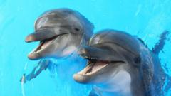 two dolphins smiling