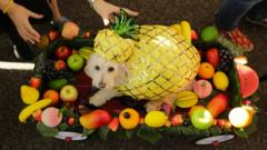 A dog wearing a bright yellow, sequined pineapple costume sitting in a tray filled with fruit.