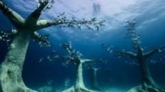 underwater forest.