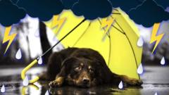 Glum-dog-under-an-umbrella-in-the-rain.