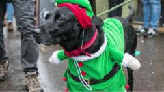 Christmas Jumper Dogs