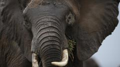 Close up of an elephant