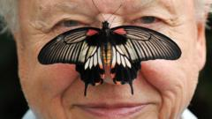 Butterfly Conservation President Sir David with a south east Asian Great Mormon Butterfly on his nose in 2012