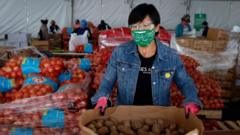 Jen Woo, a librarian from the West Portal branch, sorts potatoes on her volunteer shift at the SF-Marin Food Bank