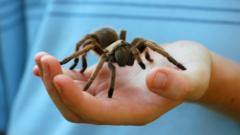 spider-in-hand.