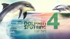 dolphin spotting tips