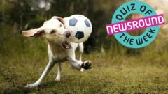 Dog playing football next to the Quiz of the week logo