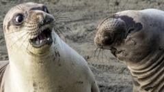 A seal looks shocked at another seal turning its head.