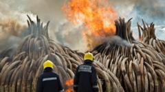 Officials burn ivory