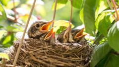 Birds-in-their-nest.