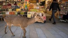 Deer-shown-in-shopping-street.